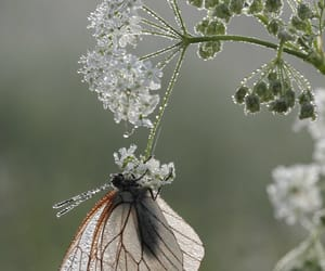 butterfly and flowers image