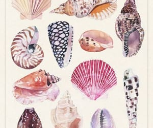 shell, beach, and snails image