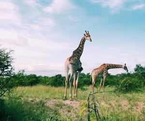 animal, nature, and safari image