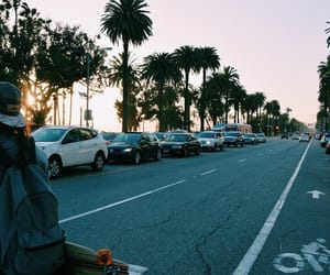 palm trees, city, and street image