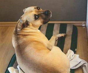 cachorro, cuteness, and dog image