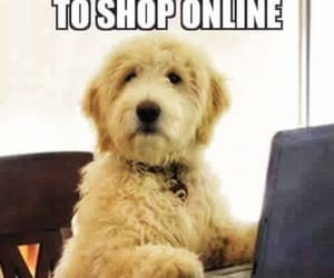 dogs, funny, and internet image