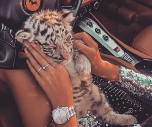 animal, luxury, and tiger image
