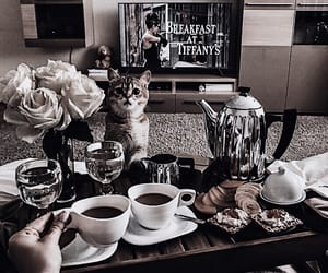 coffee, animal, and cat image