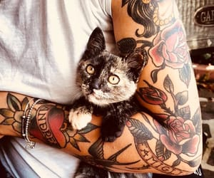 cat, cute, and ink image