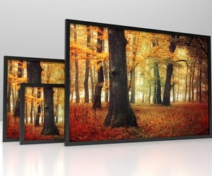 nature photography, autumnfoliage, and forestphotography image