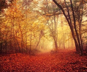 etsy, nature photography, and misty forest image