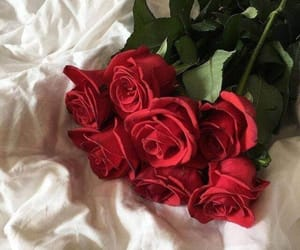 flowers, roses, and red image