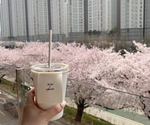 cafe, cherry blossom, and city image
