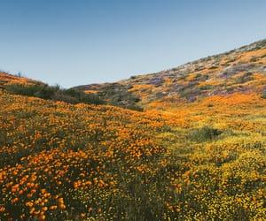 landscape and orange image