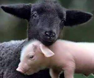 lamb, pig, and piglet image