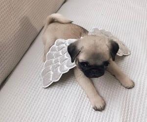 cute, animal, and dog image