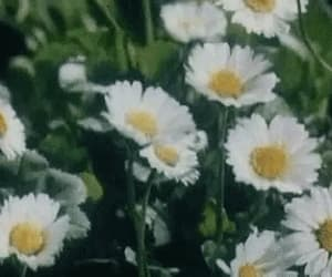 field, gif, and spring image
