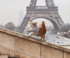 animal, cat, and paris image