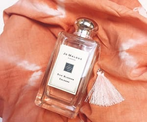 blossom, orange, and scent image