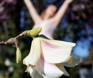 blooming, flowers, and magnolia image