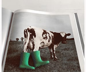 animals, cow, and shoes image