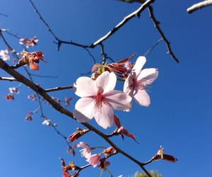 blossom, flower, and garden image