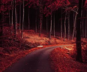 forest photography, autumn print, and autumn trees photo image