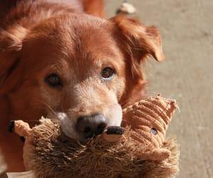 2007, animals, and dog image