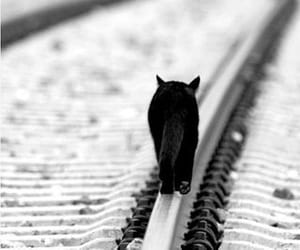 black and white, cat, and animals image
