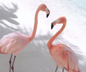 animal, flamingo, and beach image