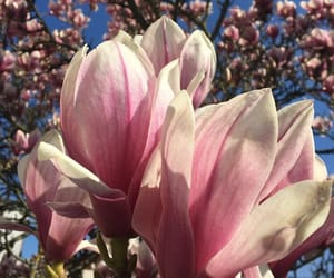 aesthetic, bloom, and blue sky image