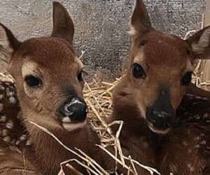 fawn and gif image