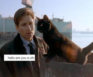 cat, ufo, and x files image