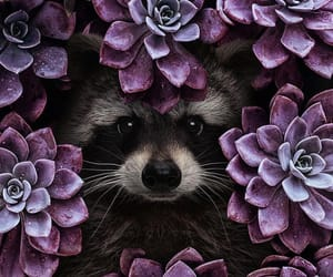 animals, art, and raccoon image