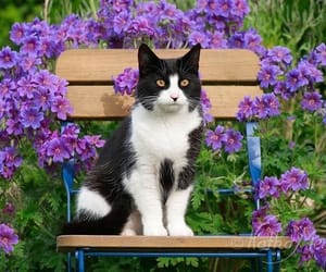 animals, blooms, and pets image