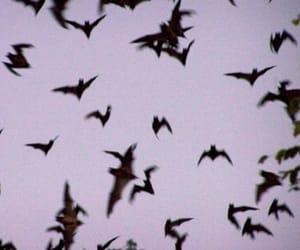 bats, grunge, and bat image
