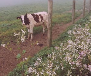 aesthetic, flowers, and cow image