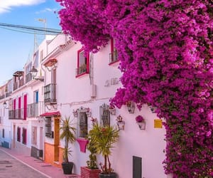 flowers, architecture, and beautiful image