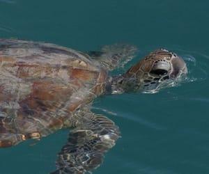 Animales, nadar, and naturaleza image