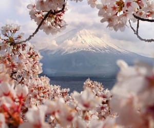 belleza, flowers, and paisajes image