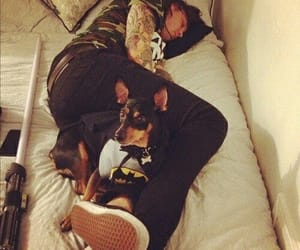 dogs and frank iero image