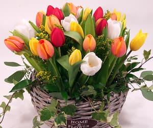 beautiful, lifestyle, and pink tulips image
