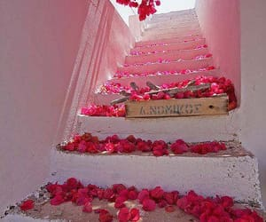 flowers, pink, and stairs image