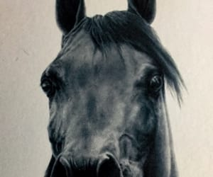 horse, horses, and power image