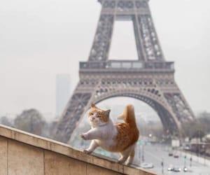 animal, cat, and paris image
