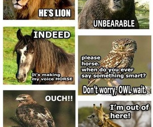 animal, funny, and lol image