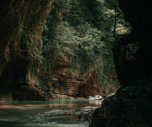 dark, forest, and landscape image