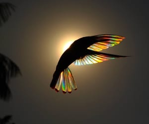 bird, animal, and colors image