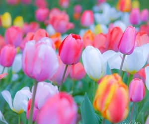 colorful, colors, and flora image