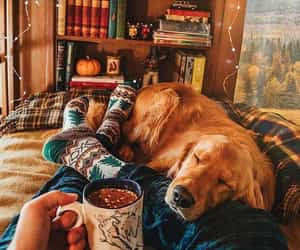 dog, autumn, and coffee image