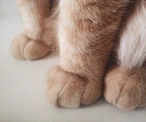 aesthetic, cream, and paws image