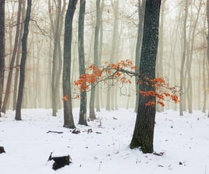 enchanted forest, etsy, and nature photography image
