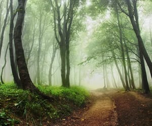 etsy, nature photography, and green forest image