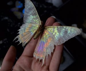 acid, beautiful, and butterfly image